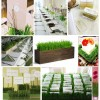 DIY Centerpieces: We Wuv Wheatgrass