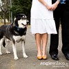 A Dog Ring Bearer? Pet-lovers Involve Furry Friends in Big Day