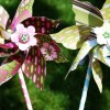 DIY Pinwheels for Your Wedding