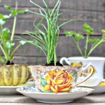 DIY Herbs in a Teacup: Eco-Friendly Favors