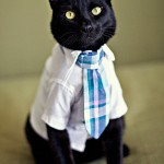 Wedding Fashions for Cats and Dogs
