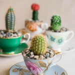 DIY Cactus in a Teacup