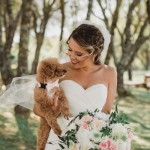 Dapper Dog: Adorable Wedding Attire for Your Pooch