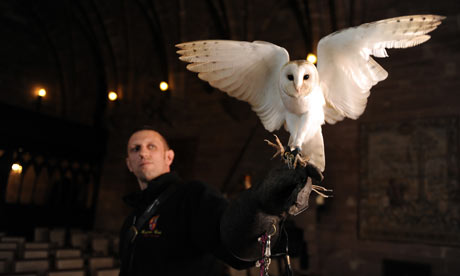 barn owl ringbearer