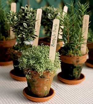 potted herbs as wedding favors