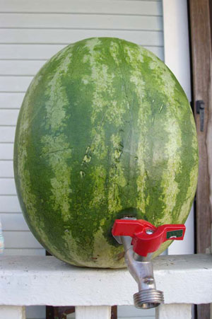 diy wedding drinks make your own watermelon keg