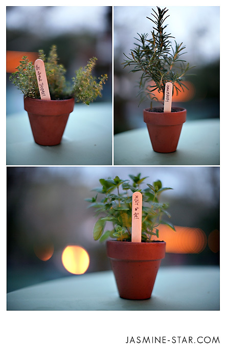 potted herb favors
