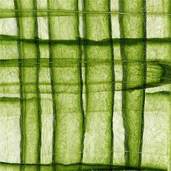 cucumber paper