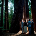 forest wedding in california