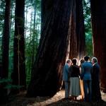 forest wedding in california