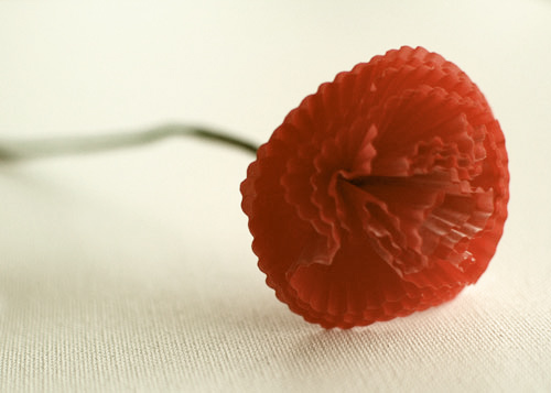 single red carnation