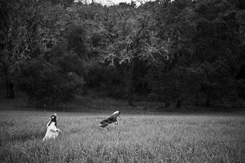 child and dog in field