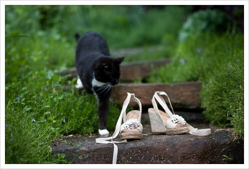 black wedding cat