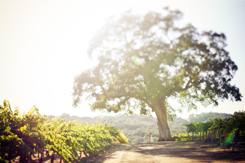 outdoor wedding in california vineyard