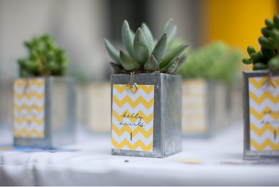diy favor succulent
