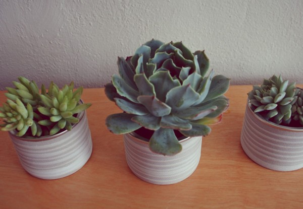 succulent diy wedding decor mod