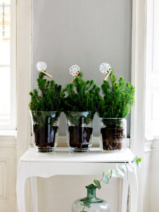 plant centerpieces for wedding