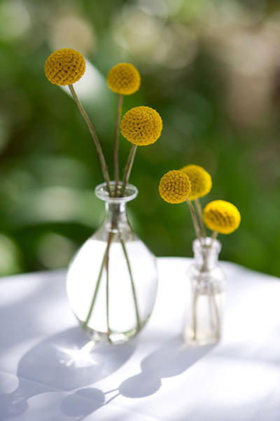 billy button centerpieces