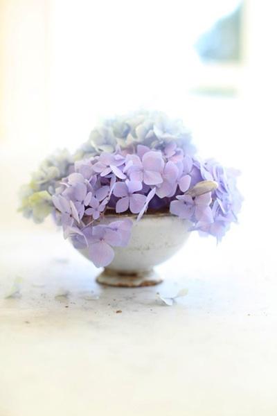 Hydrangea teacup