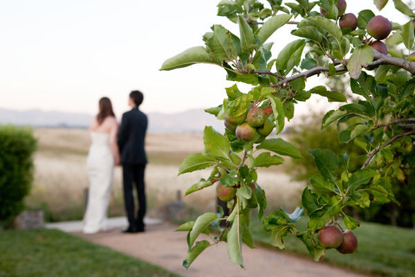wedding couple and apple tree