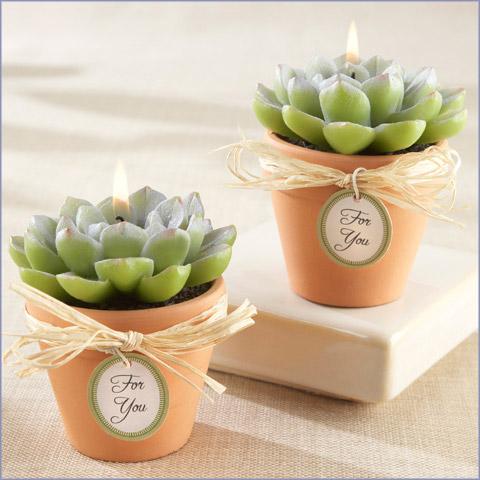 succulent candles