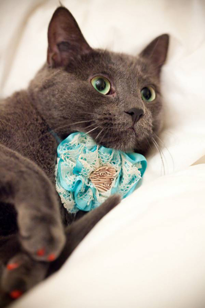 ruffled cat collar