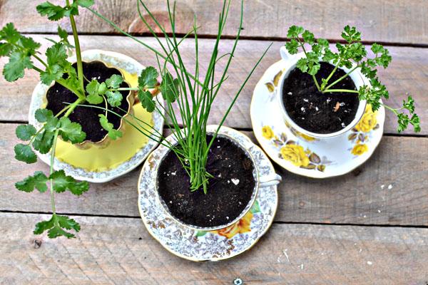 diy herbs