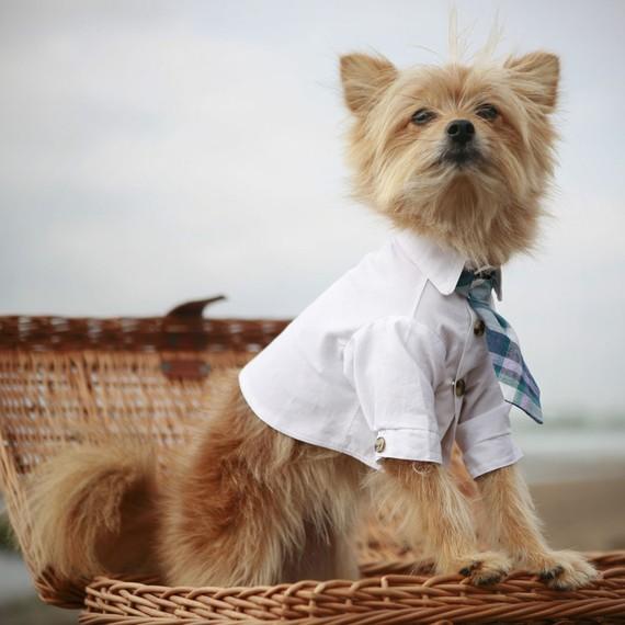 chú chó phong cách