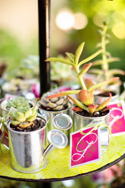 succulent favors in mini watering cans