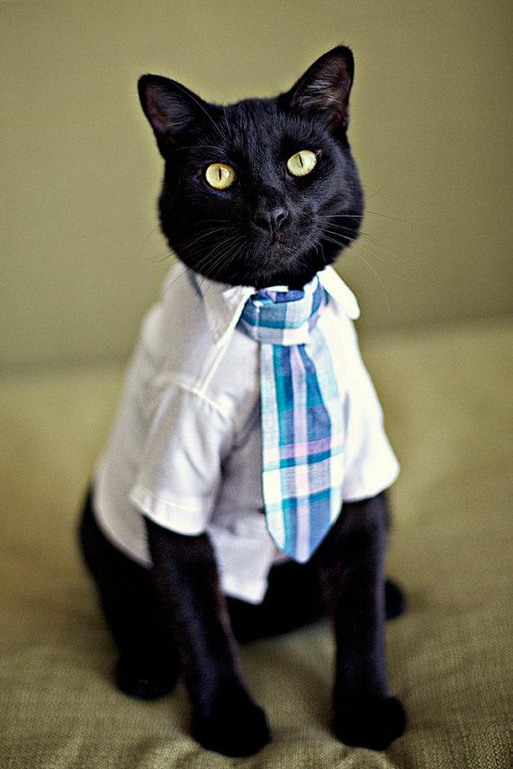 cat wearing tie