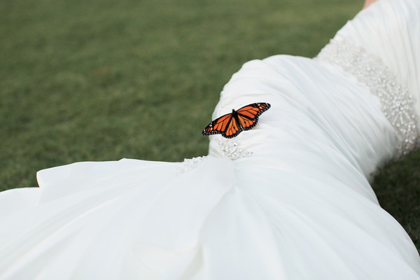 bride and butterfly