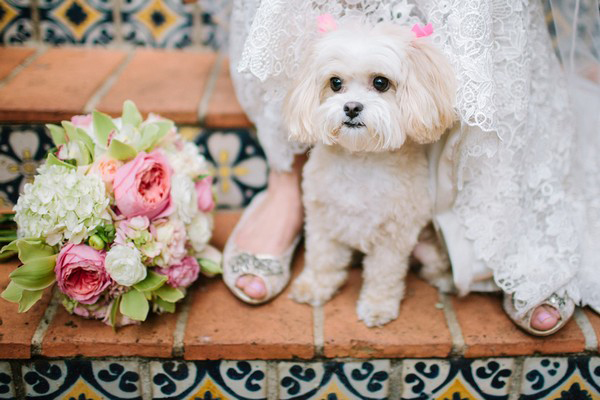 bride with little white dog