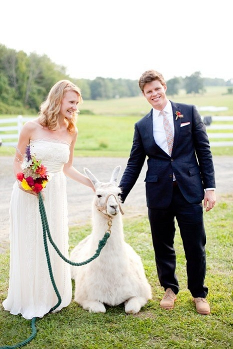 farm-wedding-animal-llama