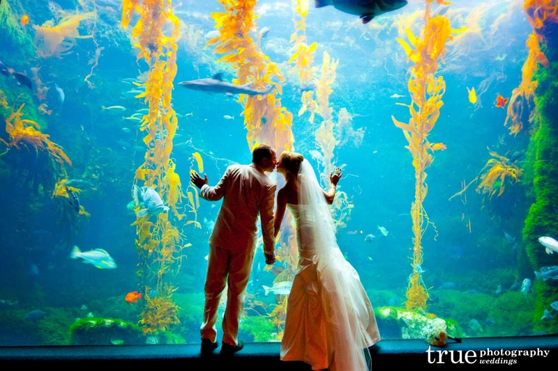 Aquarium Wedding California