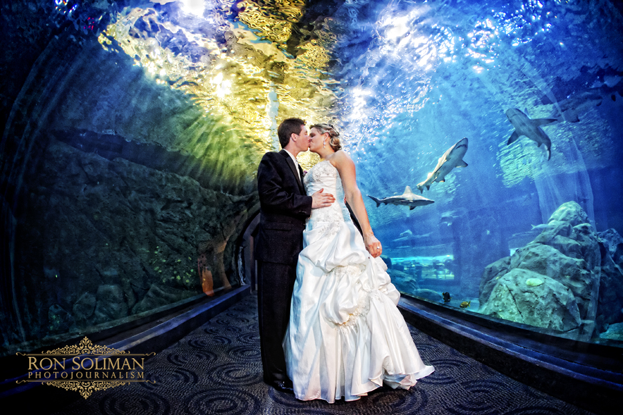 aquarium-weddings-new-jersey-aquarium-adventure