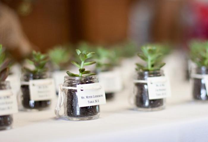 diy-mini-succulents-e1299741037665