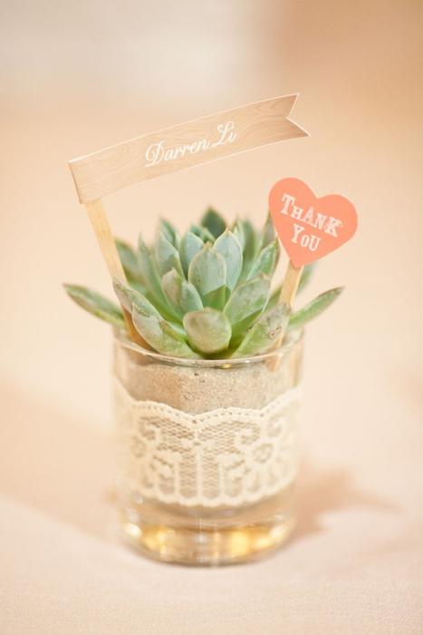 Quà tặng cho khách mời trong đám cưới từ những chậu cây xanh độc- lạ.
