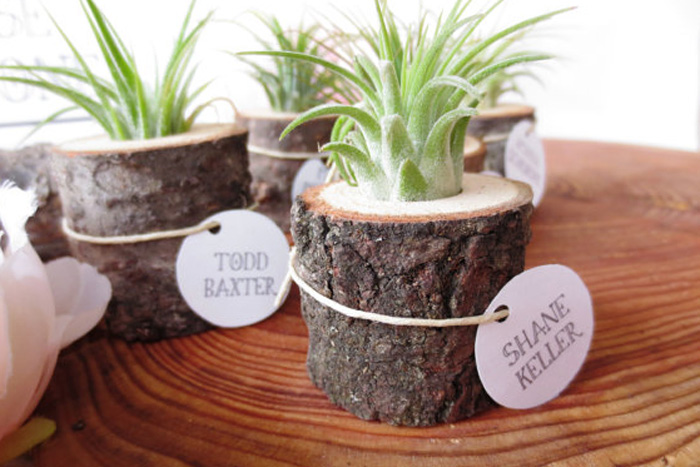 Diy wedding plant favors are perfect for a green wedding il570xn4247703366gwt solutioingenieria Choice Image