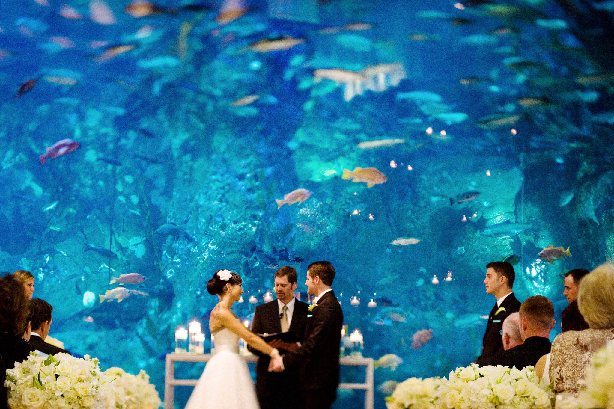 Seattle Wedding Aquarium Venue