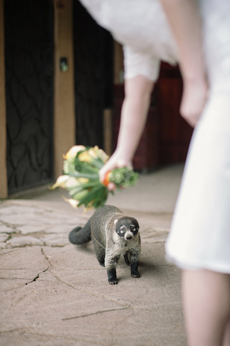 wedding-wilfdlife-animals-photography-bride
