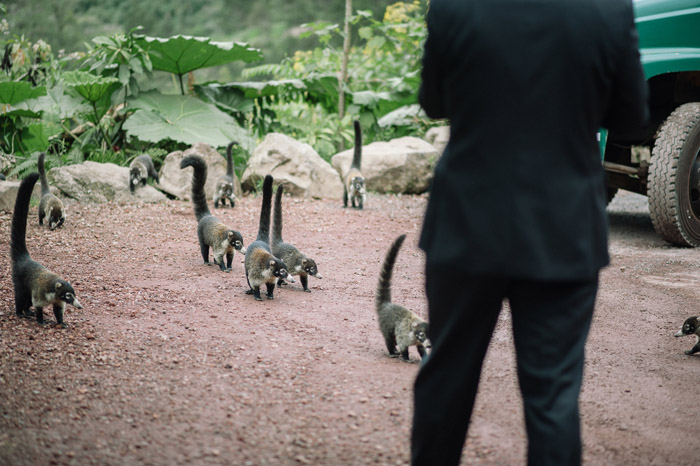 weddings-wild-animals-costa-rica-rain-forest