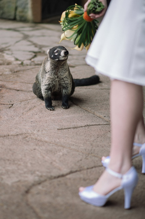 wildlife-at-wedding-bride-photography