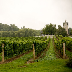 vineland-estates-winery-f