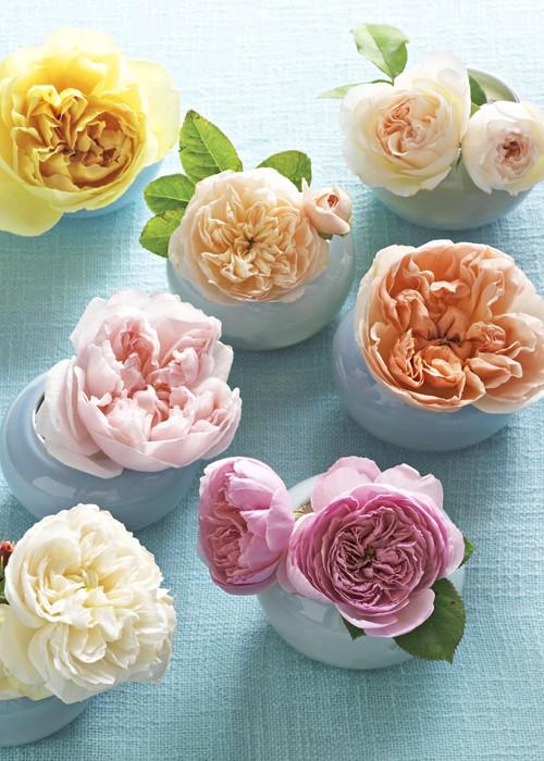 single-roses