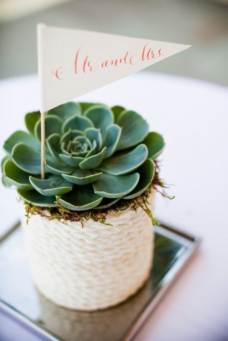 Nautical succulent wedding favor