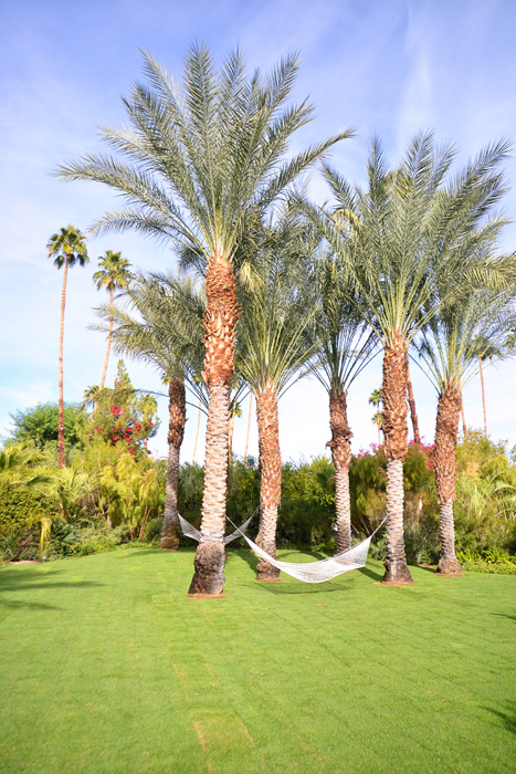 Intimate Weddings in Palm Springs - The Parker Hotel grounds