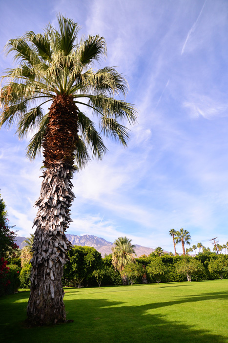 Intimate Weddings in Palm Springs - The Parker Palm Springs - grounds