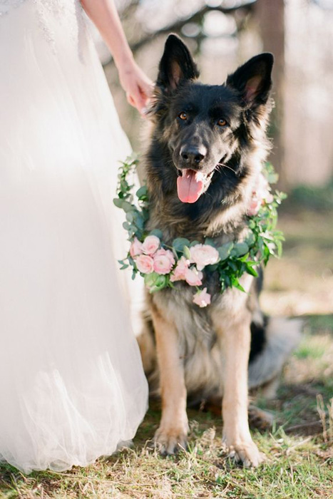 flower-dog-wreath