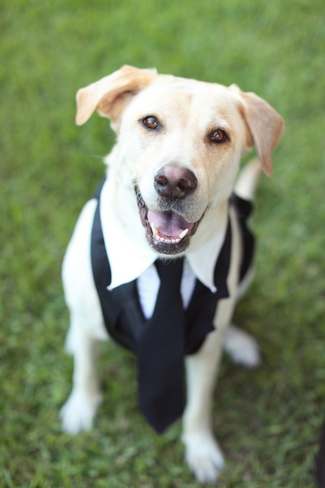 dog in suit and tie