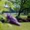 north-carolina-intimate-wedding-venue-hudson-manor-gardens thumbnail